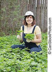 Woman gathers nettle in spring garden