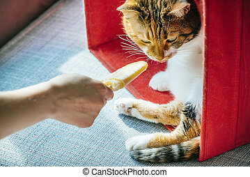 Woman giving ice-cream to furry cat