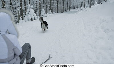 Happy woman having fun riding sleigh down snow covered mountain hill in winter forest. Girl with dog go sledding - back view. People on Christmas vacation.