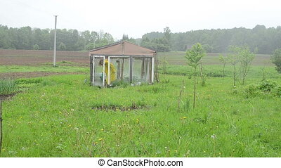 woman greenhouse rain