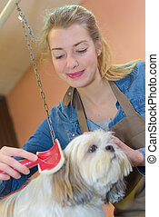 Woman grooming dog