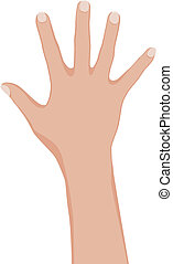 Woman hand. Vector illustration on white background.