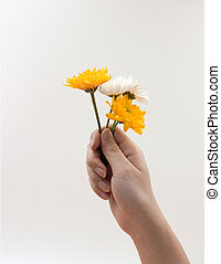 Woman hand holding a bunch of flowers On white background