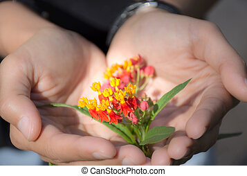 Woman hand holding beautiful flowers to gift, Spring time and inspiration