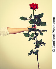 Woman hand holding flower red rose