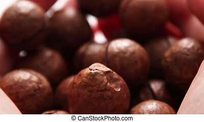 Female hand holds macadamia nut on a blurry background