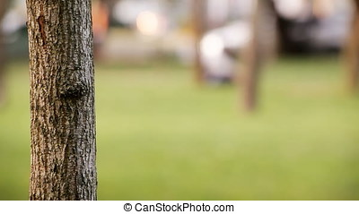 Woman Hand Miming Feather Writing on Bark Tree