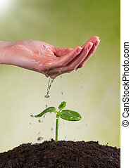 Woman hand watering young plant