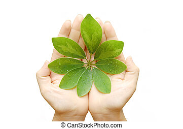 woman hand with green leaves isolated