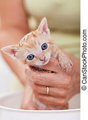 Woman hands bathing a cute kitten