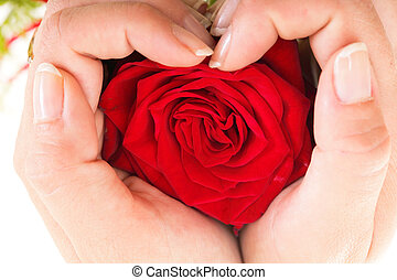 Woman hands heart with rose petals