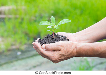 Woman hands holding a green young plant