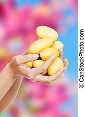 Woman hands holding potatoes