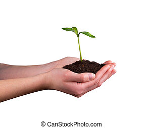 Woman hands holding young plant