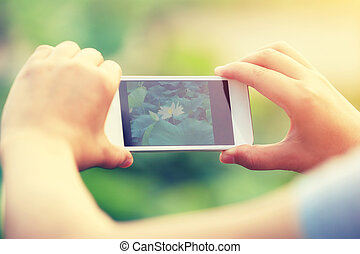 woman hands taking photo with smartphone