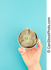 Woman hands with succulent plant