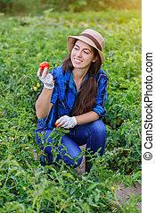 woman harvesting fresh tomatoes