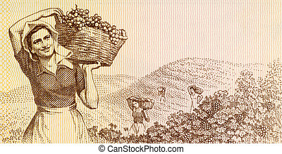 Woman harvesting grapes on 3 leke 1976 banknote from Albania