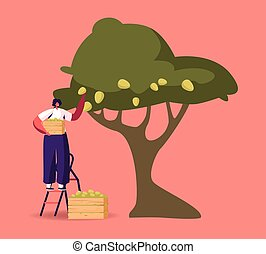 Woman Stand on Ladder Collecting Ripe Olives from Tree Branch with Green Berries and Leaves in Wooden Box. Female Character Harvesting Crop, Natural Oil Production Concept. Cartoon Vector Illustration