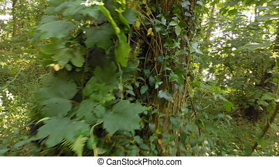 Woman hiding in bushes at forest 4k - Close-up of woman ...
