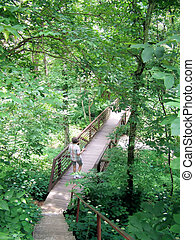 Woman Hiking  A Forest trail
