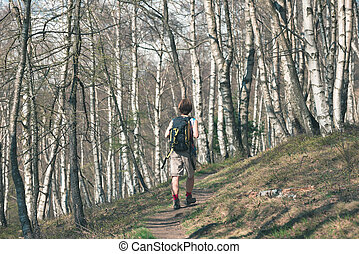 Woman hiking in the forest, one person walking in woodland, backpacking summer adventure travel, rear view, toned image