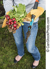 Woman hold bunch of radishes