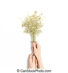Woman hold in hands a bouquet of dry oats on a white background