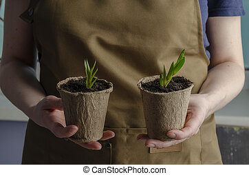 Woman hold just planted succulents. Transplanting home.