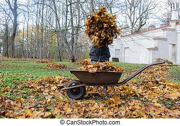 woman hold pile of dry autumn leaves near barrow