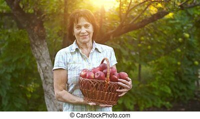 Woman holding a basket of apples - Woman in garden with...