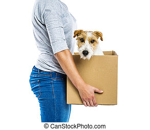 Woman holding dog in box isolated - Unrecognizable woman...