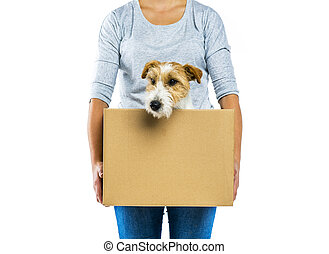Woman holding dog in box isolated - Unrecognizable woman ...