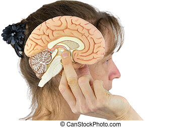 Woman holding hemisphere model  against head on white