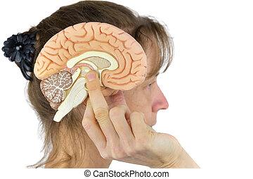 Woman holding hemisphere model  against head on white
