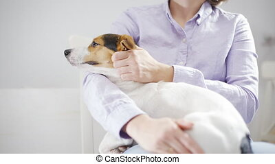Woman holding her dog - Anonymous woman holding her dog on...