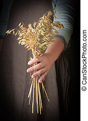Woman holding in hand ears of oats, closeup.