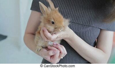 Woman holding little cute rabbit, close up