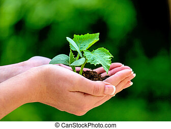 woman holding plant in hand - a woman holding a small plant ...