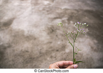 Woman holding wild flower in hand with concrete background. Copy space.
