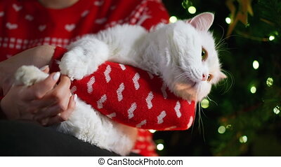 Woman holds and strokes white furry cat near Christmas tree. Domestic pet enjoys affection and attention. New Year's magical atmosphere of comfort, love and warmth. 4k. High quality 4k footage
