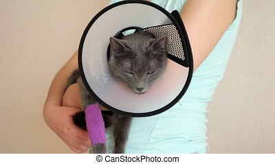 Woman holds gray cat in veterinary collar.