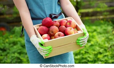 woman holds in arms wooden box shows ripe apples at dacha -...