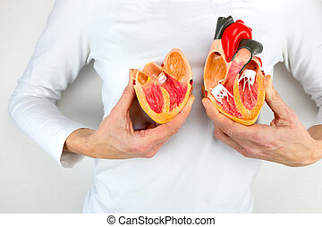 Woman holds model heart at white body