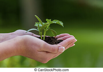 woman holds plant in hand - a woman is holding a small plant...