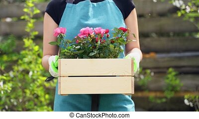 woman in blue apron holds in arms wooden box with flowers -...