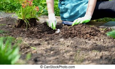 woman in blue sits on path digs hole plants flower sprouts -...