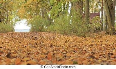 Woman in boots and white stockings goes on the leaves in autumn. Close-up Slow Motion