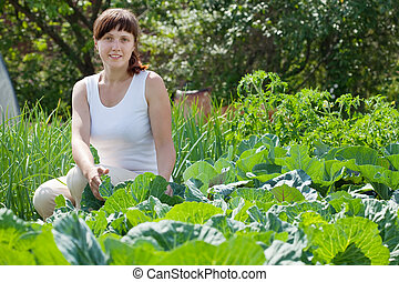 Woman  in field of cabbage