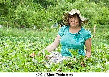 woman  in field of potato